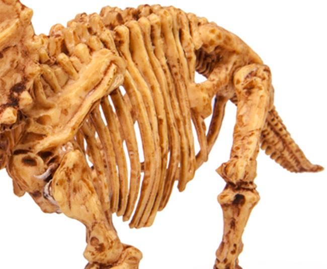 【品牌】泰国DIGITUP 【品名】DIGITUP手工考古恐龙挖掘骨架化石(三角龙可挖一次) 【产地】泰国 【材质】天然岩泥 【规格】泥盘一个、工具一套、说明书一份。 【尺寸】盒子尺寸:13.5*21*5.5cm,恐龙骨架拼好后长约20-25cm 【适用人群】建议6岁以上 【产品特点】 *纯天然岩泥 *天然树脂 *造型逼真 *激发学习兴趣 *恐龙的关节是可以活动 【品牌介绍】 泰国 Dig It Up公司(译作:挖出来),FOZEX 恐龙考古挖掘玩具的创造者,拥有12年的历史。一直被模仿,从未被超越!产品